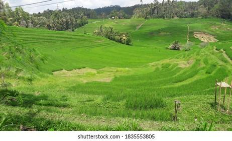 Belimbing Village Tabanan Bali Indonesia