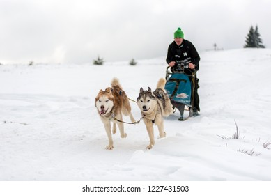 BELIS, ROMANIA - FEBRUARY 17, 2018: Musher racing at a public dog sled race show with husky dogs in the Transylvanian mountains