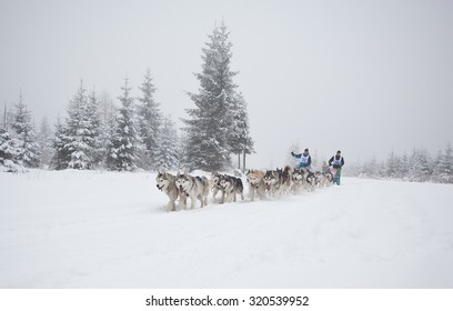 """Belis, Romania - FEBRUARY 7: Unidentified competitor racing during  """"Belis Cup"""" dog sledding competition on February 7, 2015 in Belis, Cluj, Romania."""