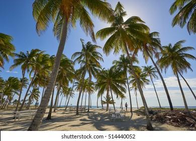 Belize - Half Moon Caye, Caribbean Sea