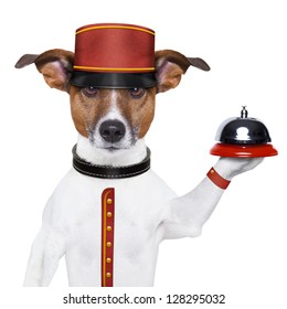 bellboy dog holding a bell with red hat