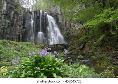 Belle cascade et les fleures  en Auvergne France