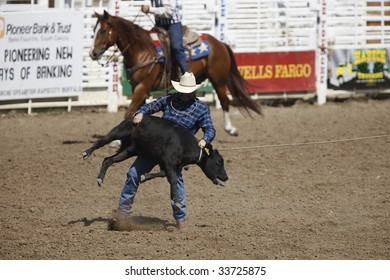 BELLE FOURCHE, SOUTH DAKOTA - JULY 4:  A competitor participates in the tie-down roping competition at the 90th annual Black Hills Roundup rodeo in Belle Fourche, South Dakota July 4, 2009.