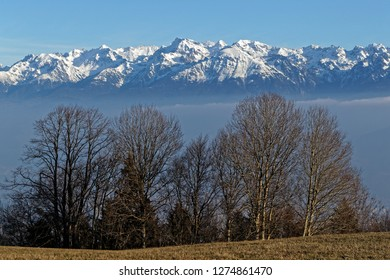 Belledonne snowy mountains behind trees of Vercors mountain range