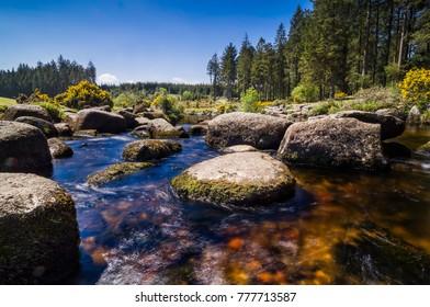 Bellever Forest And Dart River on Dartmoor National Park In Spring Season, Devon, England