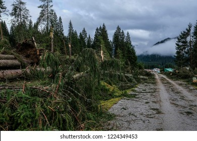 Belluno, Italy. 03th November, 2018. View of Val Visdende, in the foreground the trees cut down by the flood Belluno, Italy.