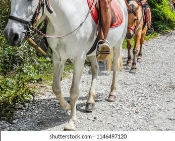 Belly and legs of a white horse with a rider on his back for a walk.