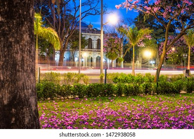 Belo Horizonte/MG/Brazil - August 05th 2019: Liberty Palace Facade (Palácio da Liberdade) at Dusk with Cars Traffic Light and Fallen Pink Leaves from The Pink Trumpet Trees - Praça da Liberdade, BH