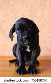 Beloved Puppy portrait