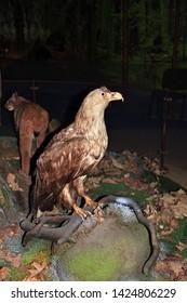 Belovezhskaya Pushcha, Belarus - 12 Jun 2015. Museum of Animals in Belovezhskaya Pushcha