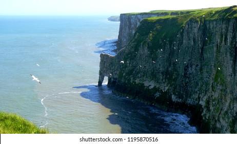 Bempton Cliffs in Springtime, Yorkshire Coast