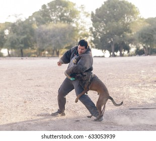 Ben Shemen, Israel - July 30 2013: Dog and its human training on defense techniques in Ben Shemen forest, Israel on 30 July, 2013.