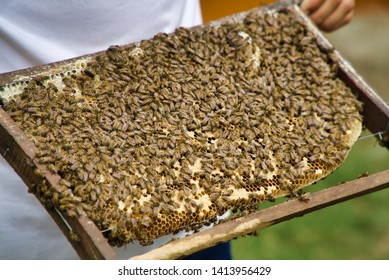 Ben Tre, Vietnam - March 22, 2019: Ben Tre Bee Farm