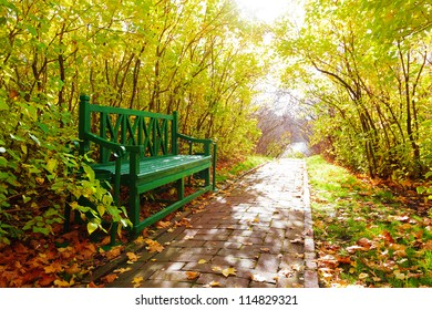 Bench among trees in autumn park