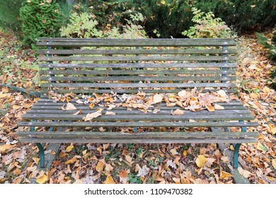 Bench in autumn park. Dry yellow leaves are lying on the old gray wooden bench.