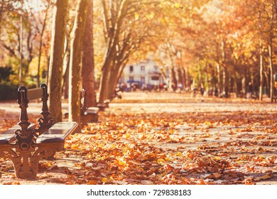 bench in autumn park in Paris, romantic fall background