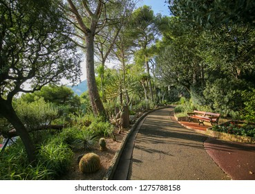 Bench in the Beautiful St Martins Garden on the Rocher in Monaco-Ville, Monaco