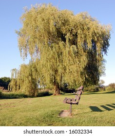 Bench by willow tree