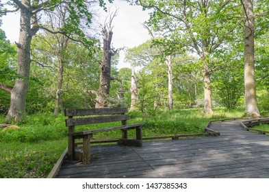 Bench by a wooden footpath in the nature reserve Halltorps Hage with old oak trees on the swedish island Oland