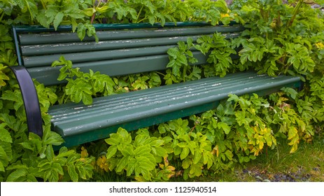Bench covered with flowers.