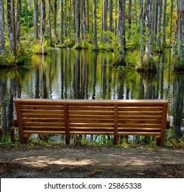 Bench in a Cypress Swamp