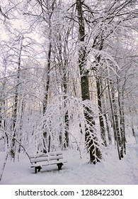 A bench in the forest during winter. Beautiful landscape of Larvik, Norway.