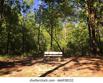 A bench in the forest with lots of trees