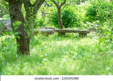 Bench in fresh green