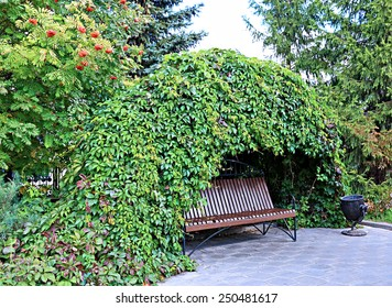 Bench in garden under curly thickets of wild grapes