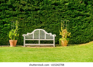 Bench with green pine bush on the background