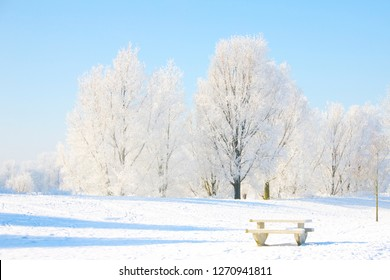 Bench in a landscape full of snowy trees