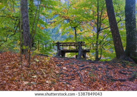 A bench in the middle of a forest in autumn colors