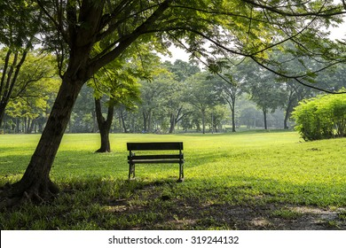 Bench near tree in public park.