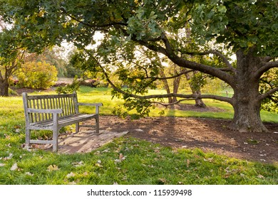 Bench and oak tree in city park in the autumn