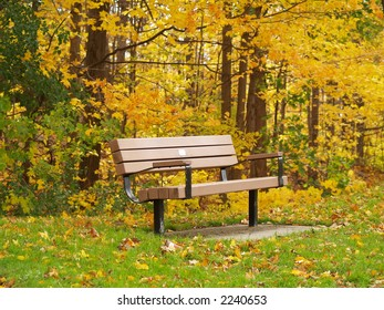 Bench on Park