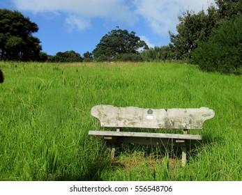 Bench Overlooking the Coast on Waiheke Island