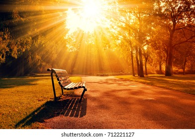 Bench in a park during beautiful sunset