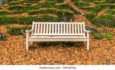 Bench in park with fallen leaves on the ground during the autumn