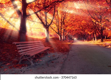 Bench in park and trees in red autumn color. Sunlight between the branches