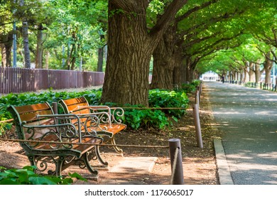 A bench placed in a tree-lined street of ginkgo. Minato, Tokyo, Japan.