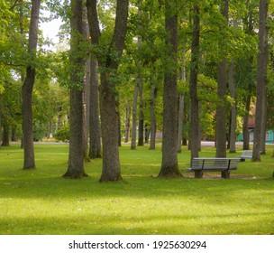 Bench in a quiet park