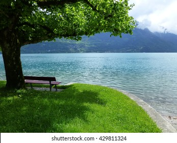 Bench in the shade of a tree on the banks of Brienzersee, at Oberried, Switzerland