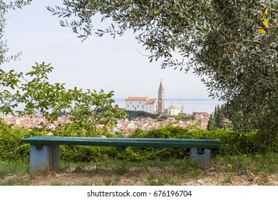 A bench in the shade of a tree with a view of a church in the center of Piran