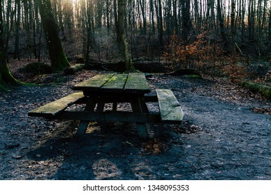 Bench and table in the woods
