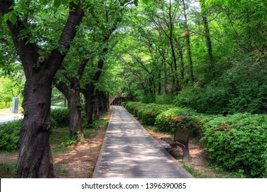 a bench and a trail surrounded by trees and nature in dream forest park in seoul, south korea