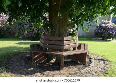 Bench at a tree