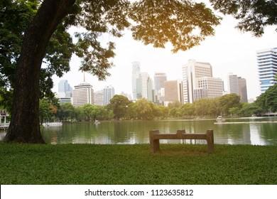 Bench and tree in Lumpini park Bangkok