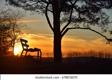 bench and tree at sunset