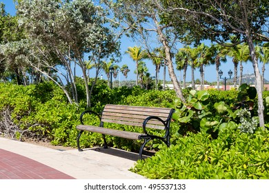 Bench in Tropical Paradise by Sidewalk