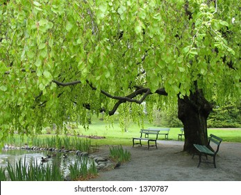 Bench under green leafy canopy in park
